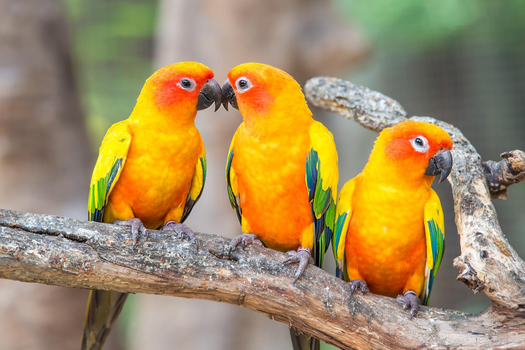 Perruches - Parc Ornithologique de Bretagne